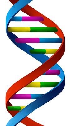 f75cb886d58 Jak Zhubnout  Odemkněte Tajemství Vaší DNA   Získejte Klíč ke svému ...